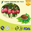 100% Natural Herb Extraction Hawthorn Fruit Extract 10%-90% Flvones