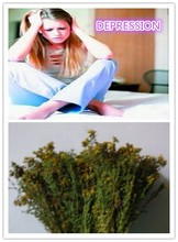 Extract herbal depression medicine hypericin
