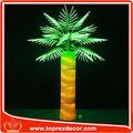 Atacado todos os tipos de palmeiras