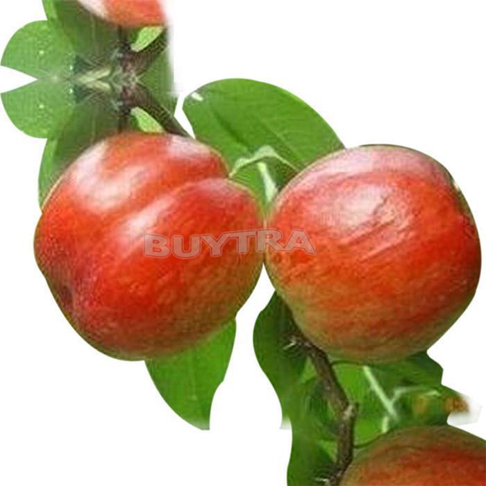 Карликовое дерево Other 20 /apple SH-HG-494