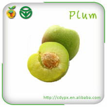 Chinese Sour Plums Fresh Plums Green Plums with Low Price