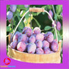 Wholesale Chinese Dehydrated Plums / preserved plum for high quality