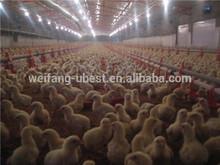 frangos frango automática avesdecapoeira equipamento usado