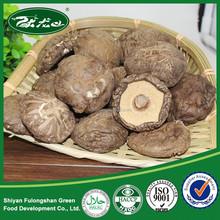 Best specie and taste China dried flower mushroom in gift box