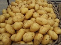 chinese yellow holland potato