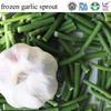 2015 hot sale forzen vegetable garlic sprout high quality