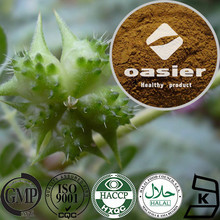 Factory supplier Natural Plant Extract ISO Kosher Certificate 40% 98% Saponins Tribulus Terrestris Extract Powder