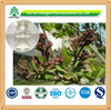 100% Pure Natural Eugenol Oil