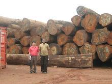 Quality Ebene Logs Timber (Ebony, cape-dawson, grenadille, African blackwood, grenadillo )