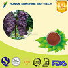China product anti inflammation Grape seed P.E. 95% OPC