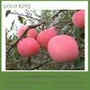 Export Grade Yantai Fresh Fuji Apple Fruit