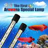 aquarium LED lighting for arowana fish