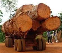 Azobe Round Logs