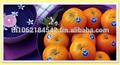 Premium naranja honeyqueen( mandarín), el comercio de exportación de tailandia