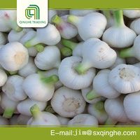 china nmesh bag good farmer garlic