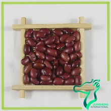 Square Small Red Kidney Beans Wholesale Price