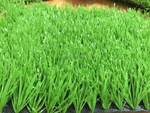 Economical and excellent quality artificial turf grass for soprts