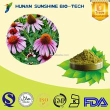 Professional supplier for immune booster medicines Echinacea purpurea extract 0.5%-10% chicoric acid