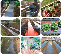 Agricultural Plastic Black Builders Mulch Film for weed control