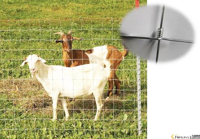 Vente chaude acier galvanisé noué Mesh clôture pour chèvre ( usine ...