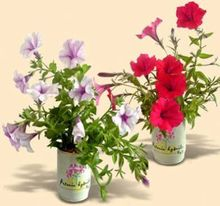 Tin canned flower,tin flower container,small tin canned flower pots