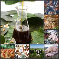 1S Soybean Extract aquatic animal feed grade fluid lecithin soy soja factory
