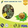 100% natural Saponins Tribulus Terrestris Extract Powder/90% Saponins for Lowering blood-fat & Reducing cholesterol
