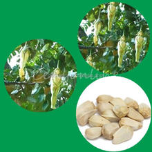 Venta al por mayor 2015 recién llegado de 10 unids Rare Ginseng femenino frutas salud berenjena Pepino semillas semillas de árboles planta planta Funny fáciles de cultivar