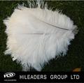 lo281 plumas de avestruz para la decoración