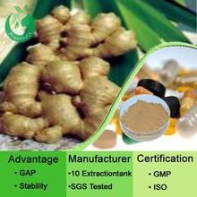 Ginger Powder/Ginger Extract/Gingerol