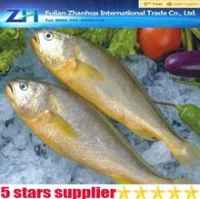 Price for yellow croaker fish, BQF yellow croaker hot selling, frozen croaker yellow croaker