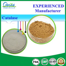 High Quality Catalase Powder