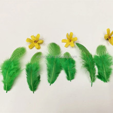 Dyed Sliver Pheasant Tails feather,pheasant feather