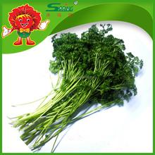 2015 Fresh vegetable parsley frozen vegetables organic green food