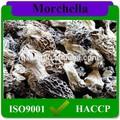 Negro secos morel/morchella/morchella conica