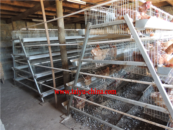 layer battery cage factory for poultry farm