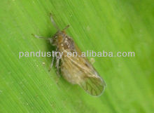 insecticide manufacture 98%TC 90%SP 40%SP 20%EC 24%SL Thiodicarb/ Lannate/Methomyl in secticide