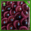 high quality red delicious apples exporter big huaniu apples factory