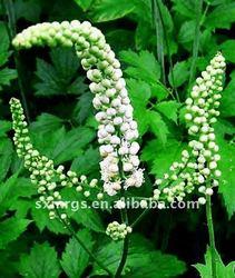 Natrual product/ Black cohosh P.E/Black Cohosh Extract