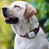 Anti get lost GPS Track pet smart gps tracker with SOS alarm and real time tracking