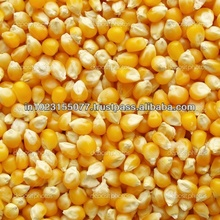 Yellow Corn For Animal Feed