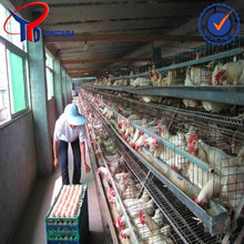poultry for chicken layering cage