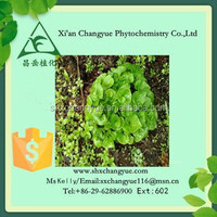 Pure natural manchurian wildginger herb extract