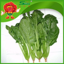 Whole Leaf Spinach Frozen vegetable