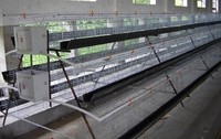 Top grade chicken use layer cage system