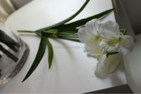 Latest hot-selling Artificial single daffodil flowers