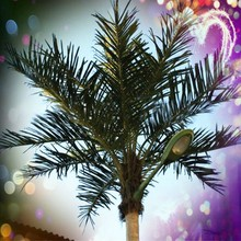 artificial canary date palm tree with LED light China manufacturer