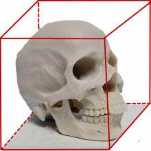 el precio de fábrica al por mayor para la resina de cráneo