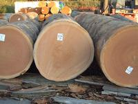 Bubinga / Wood Logs for sale