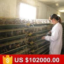 Fábrica stock directo de codorniz jaulas de cría